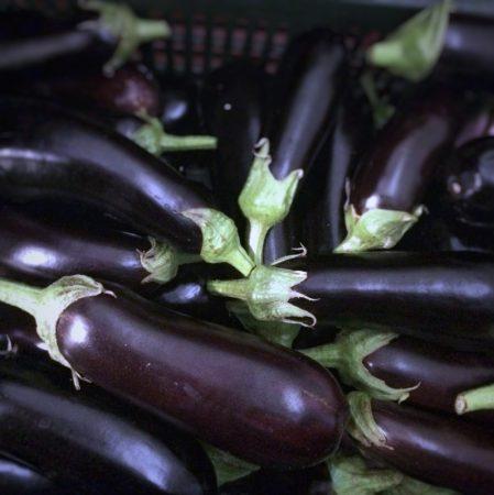 Organic Eggplant  (kg)