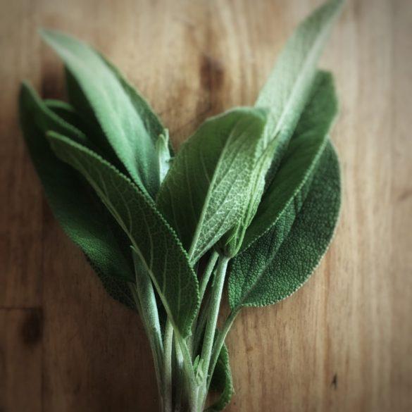 Organic Sage (bun)