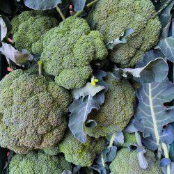 Bio brokkoli (300g)