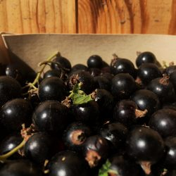 Organic Blackcurrants (250g)