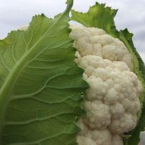 Organic Cauliflower (pc)