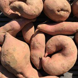 Bio Batáta (narancs) (kg)