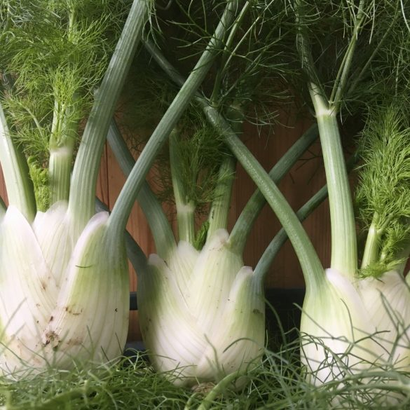 Organic Fennel (pc)