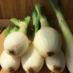 Organic White Salad Onions (pc)