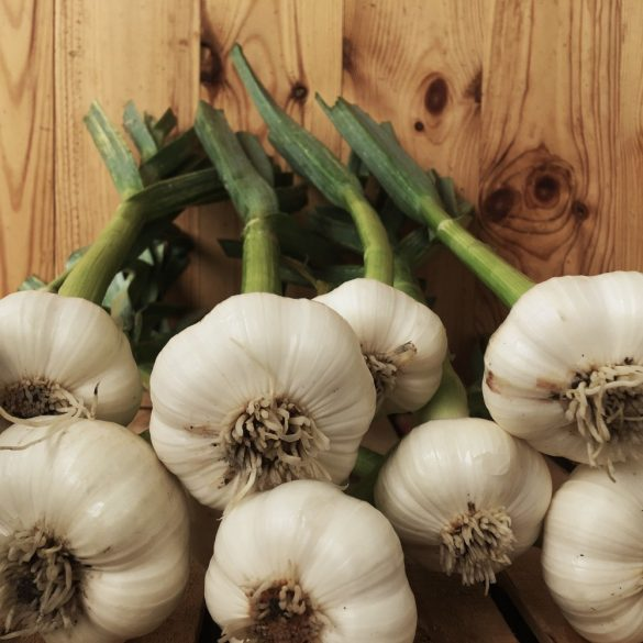 Organic Green Garlic (pc)