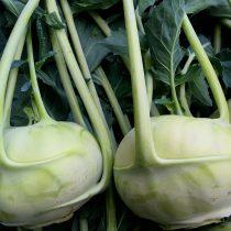 Organic Kohlrabi (pc)
