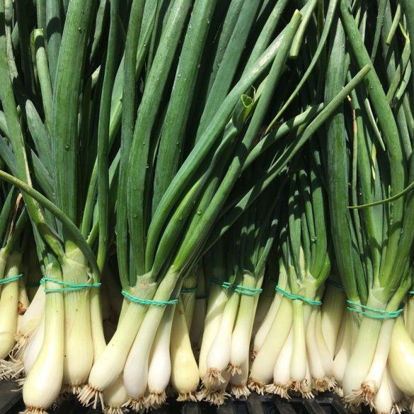 Organic Spring onion (pc)